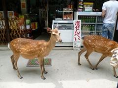 Hungry Deer!