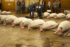 Tuna waiting to be auctioned