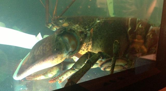 Big Lobster Bad Boy