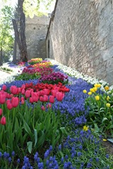 Tulips in Gulhane Park