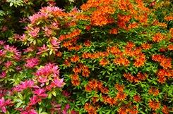 Kelburn Gardens